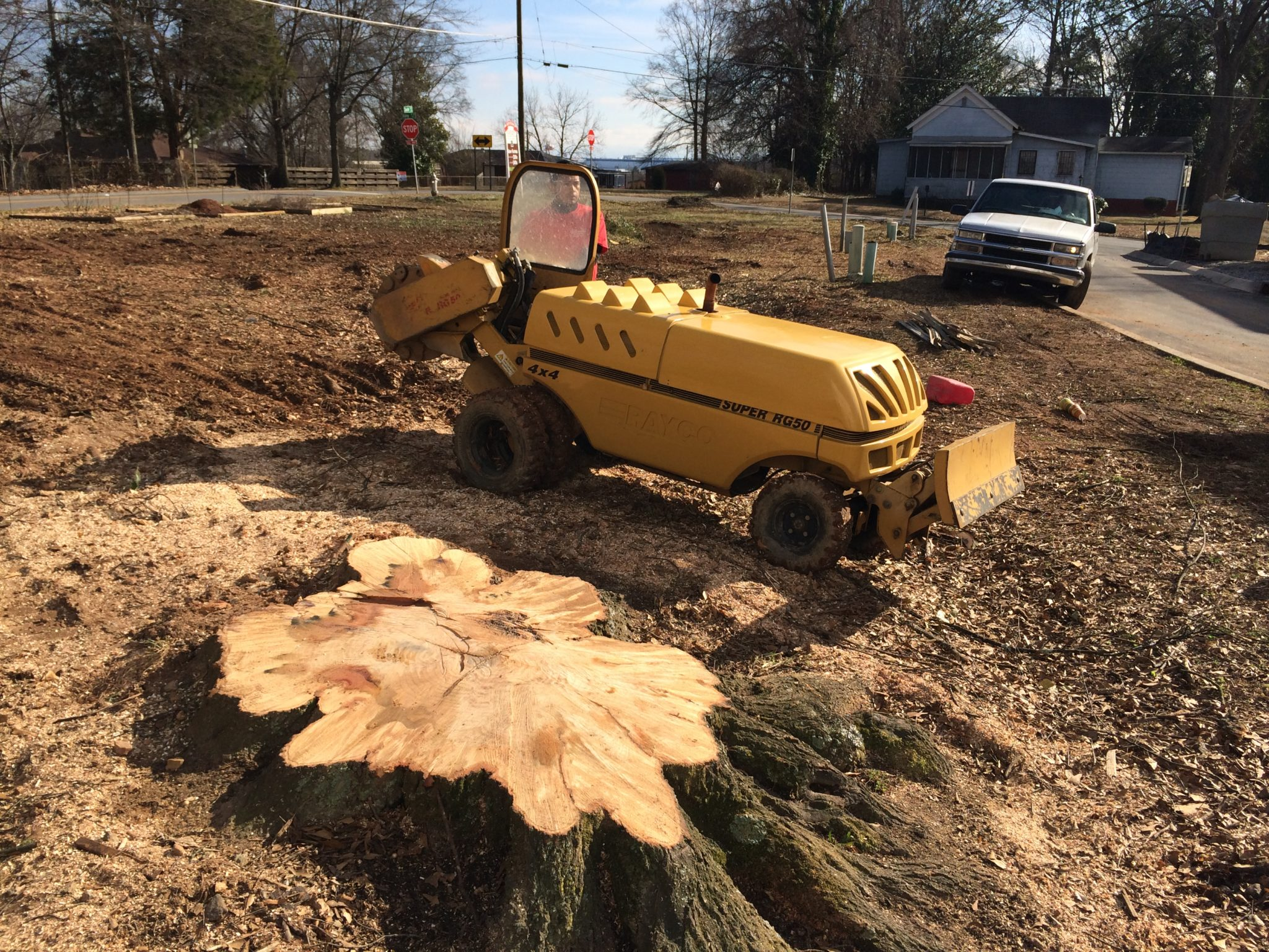 stump grinding large tree stump removal