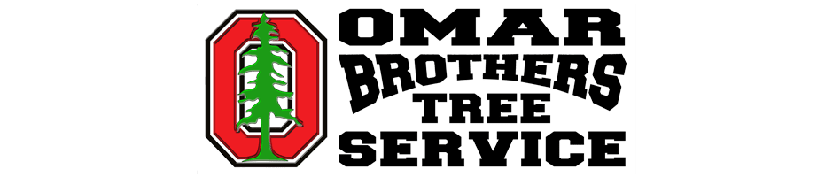 Tree Removal | Omar and Brothers Tree Service